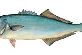 'Sensaciones' y 'Muestras Gastronómicas' del Pescado Azul