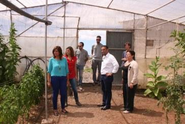 Visita del viceconsejero de Agricultura del Gobierno de Canarias a 'Las Crucitas'