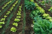 Productos Agrícolas 2