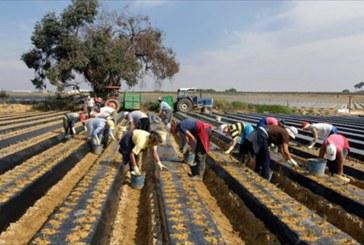 El Ayuntamiento solicita 200.000 euros para el proyecto 'Emplea Agrícola 2015'