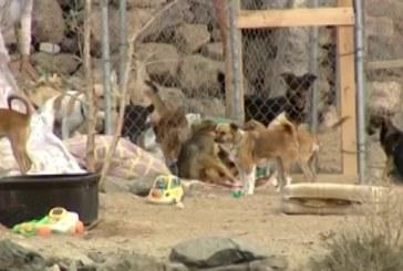 Una jauría de perros ataca a varias personas en El Médano