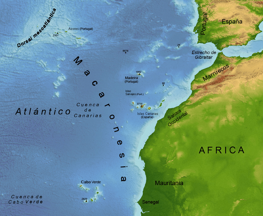Mis tiempos del Sur (IV): La llegada de la vida a las Islas (plantas, animales y seres humanos)