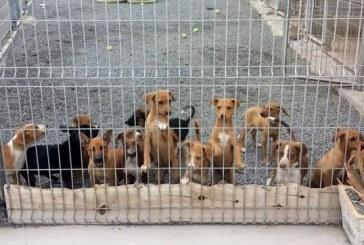Granadilla de Abona recupera el servicio de recogida de perros abandonados