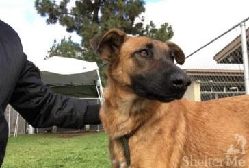 Zuzu, la perra que reconoció a la familia que la abandonó: una historia con moraleja para reflexionar