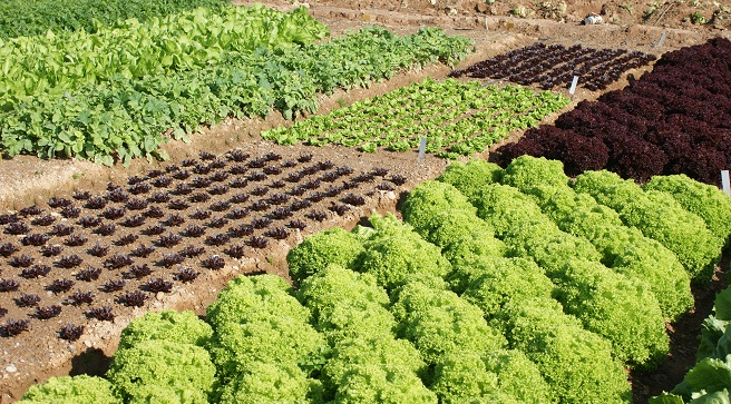 Los cursos 39 recuperaci n de suelos aumento de la for Rotacion cultivos agricultura ecologica