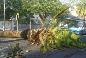 Alerta por fuertes vientos y cierre de los centros públicos del municipio este miércoles