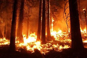 'Estabilizado' el incendio