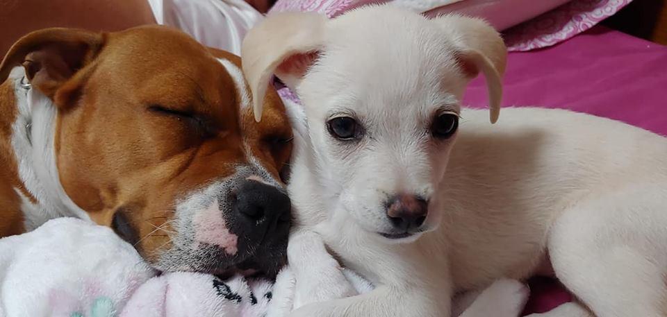 'Brigada Animalista' rescata unos 150 perros de una finca en San Isidro y solicita quienes los acojan