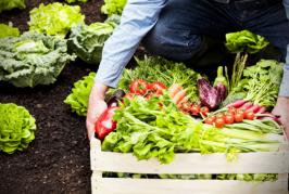 El curso de Extensión Universitaria 'Producir y comercializar productos ecológicos agrarios. La perspectiva del agricultor', del 25 al 27 de marzo