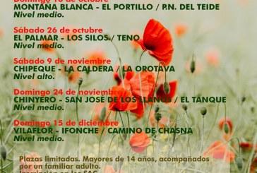 El plazo para inscribirse a la Ruta 'Chinyero – San José de los Llanos / El Tanque' que tiene lugar el próximo domingo 24 de noviembre finaliza este jueves