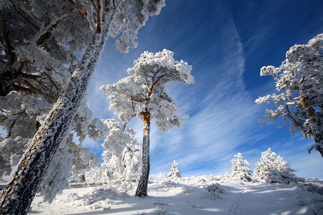 Resultado de imagen de los colores de la nieve