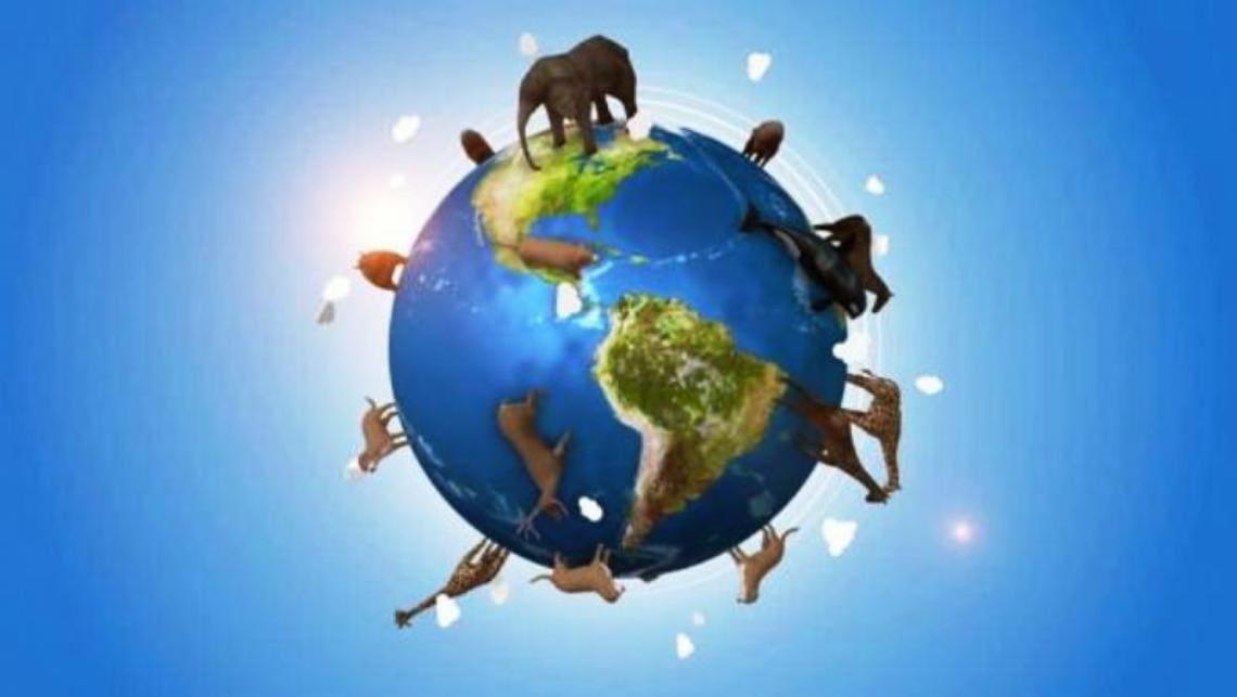 Preocupante mensaje de la ONU sobre el medio ambiente natural en ...
