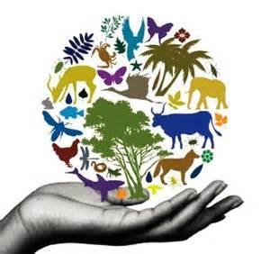 Globalización ambiental y la biodiversidad |