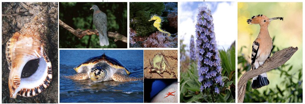 Especies Amenazadas de Canarias: Canarias debe desarrollar su ...